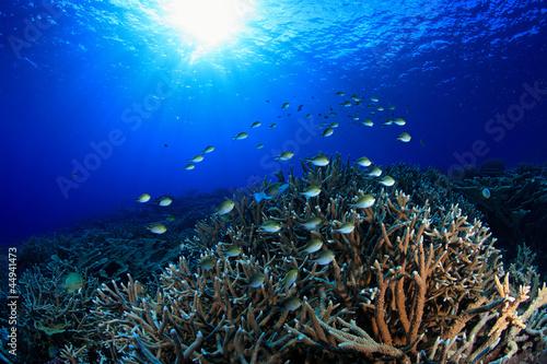 Rafa koralowa z damselfish