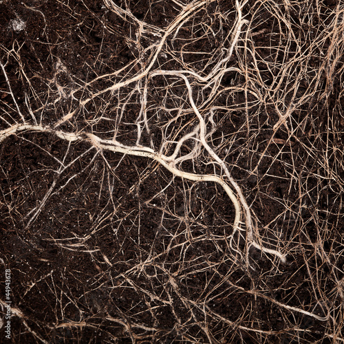 Photo  Roots in a soil