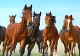 Konie w galopie na polanie