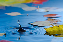 Water Droplet In Pond With Aut...