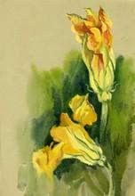 Watercolor Flora Collection: Z...