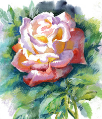 Fototapeta Vintage Watercolor Flower Collection: Rose