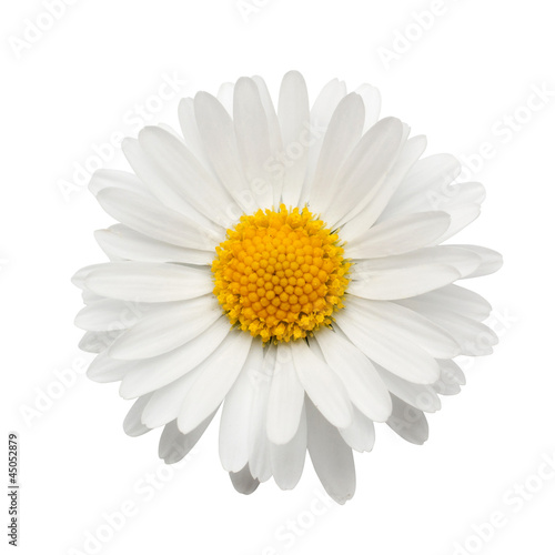 Spoed Foto op Canvas Madeliefjes beautiful flower daisy