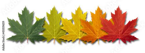 Photo  Autumn Border Element