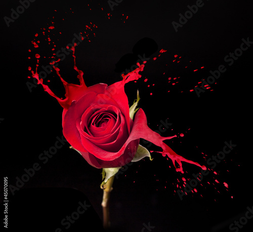 red rose splashes #45070095