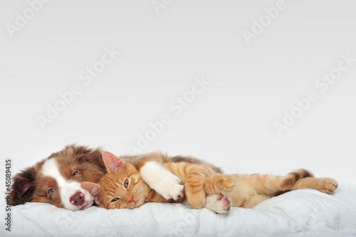 Foto op Plexiglas Kat Hund und Katze