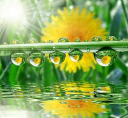 Fototapeta Do Spa Fresh grass with dew drops close up