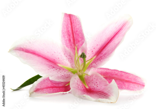 beautiful pink lily, isolated on white © Africa Studio