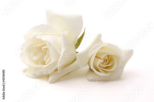 Plakat  Rose