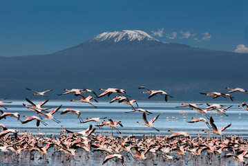 Panel Szklany Góry Uccelli con il Kilimangiaro