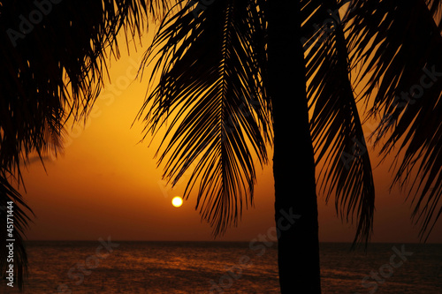 Sunset behind palm trees Wallpaper Mural