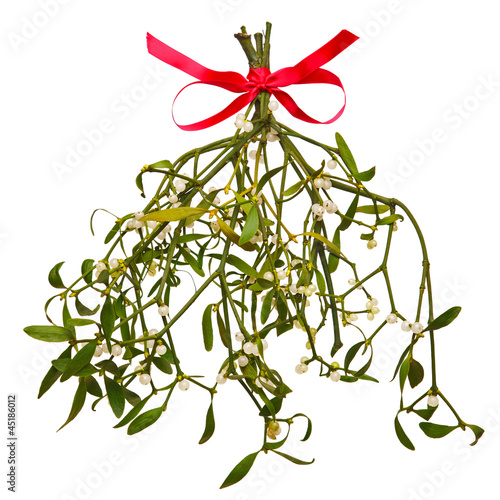 Fotografie, Obraz  Sprig of Mistletoe isolated