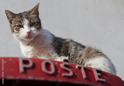 Photo  Cat on a Postbox