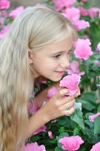Красивая девушка нюхает цветы лаватера (Lavatera)