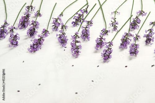 Lavender - 45235446