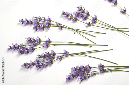 Lavender - 45235471