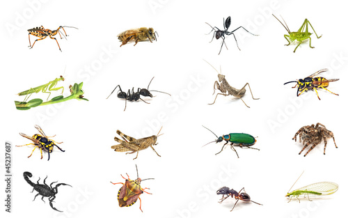Set insects isolated on white