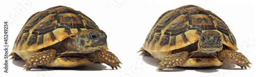 Poster Tortue Turtles Tortoise