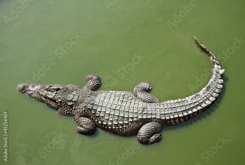 La pose en embrasure Crocodile Crocodile