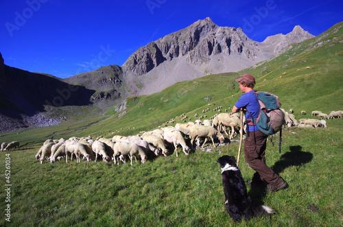 Fotografie, Obraz  vie d'alpage - berger et son troupeau de moutons