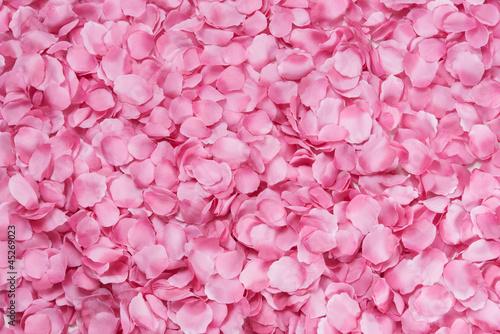 Fotografía  Petali di rosa