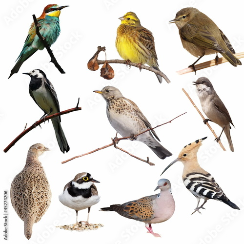 Papiers peints Oiseau Set birds isolated on white background, texture