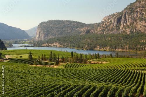 Photo Stands Vineyard Okanagan Valley Vineyard Scenic, British Columbia