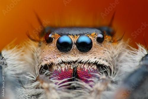 Deurstickers Hand getrokken schets van dieren Extreme detailed view of phiddipus regius jumping spider