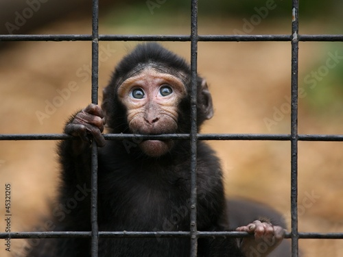 Fotografie, Tablou  Sad little monkey
