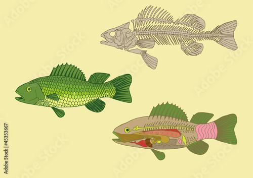 sekcja-ryby