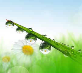 Panel Szklany Podświetlane Woda Krople Fresh grass with dew drops