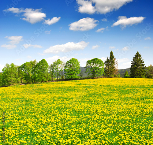 Deurstickers Geel Spring landscape in the national park Sumava - Czech Republic