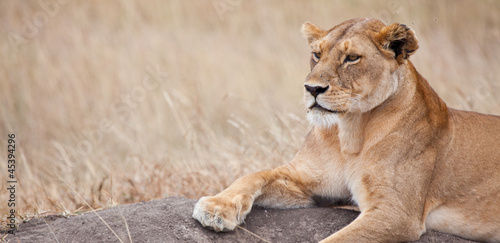 Fotografie, Obraz  Proud Cat