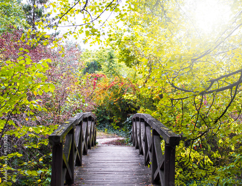 Fototapety, obrazy: Bridge in the forest