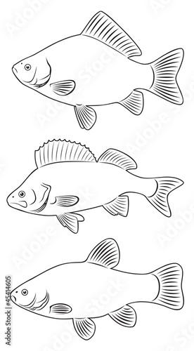 freshwater fish Tablou Canvas
