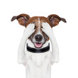 canvas print picture - hiding covering eye dog