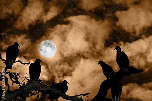 Fotografie, Obraz  Vultures silhouetted against a full moon and spooky orange sky
