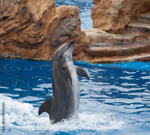 Staande foto Dolfijnen Dolphin standing at his fin