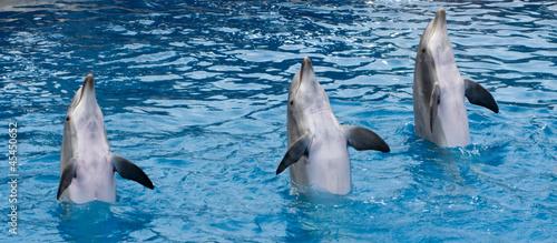 Poster Dolfijnen Standing dolphins