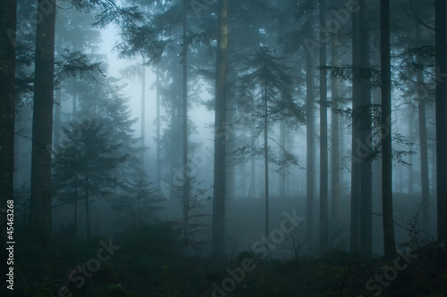 Fototapeten Wald Magic morning spruce forest