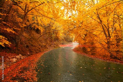 Aluminium Prints Autumn Autumn landscape with light trails on the road
