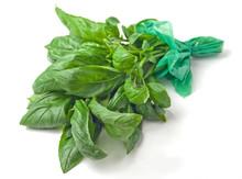 Fresh Basil - Basilico