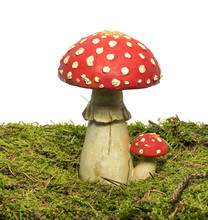 Red And Whte Mushroom