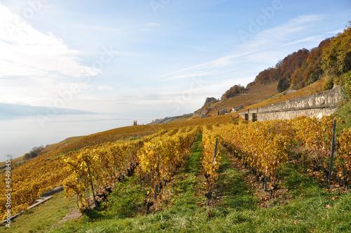 Papiers peints Vignoble Vineyards in Lavaux region, Switzerland