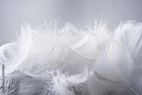 羽根の集合