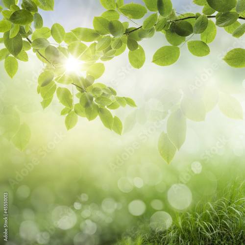 wiosna-w-tle