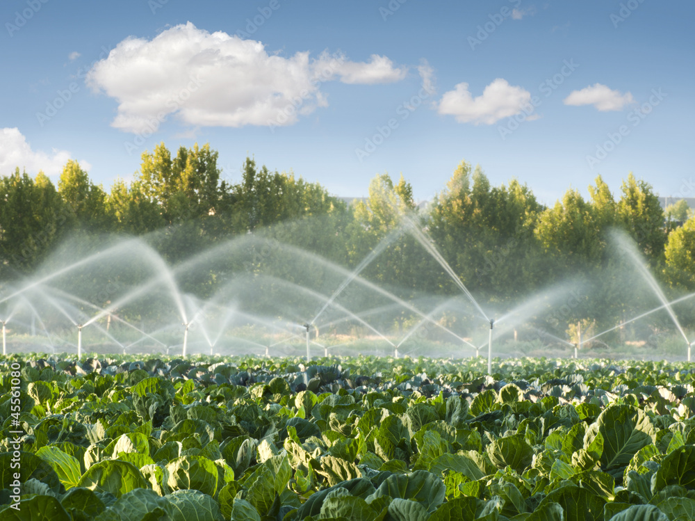 Fototapety, obrazy: Irrigation systems in a vegetable garden