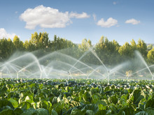 Irrigation Systems In A Vegeta...