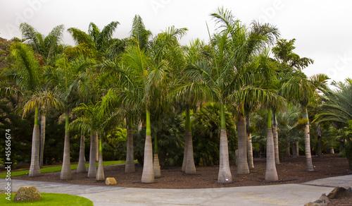 palmy-de-gran-canaria-las-palmas-ogrod