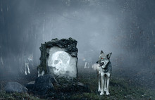 Wolves Guarding An Old Grave